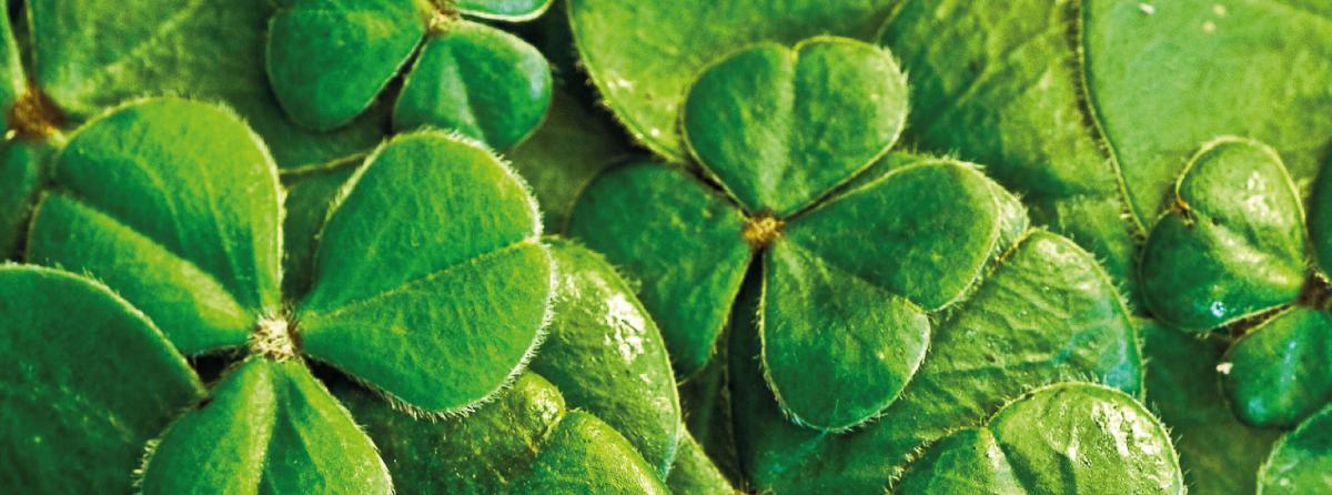St Patrick's Day: Sudoku and Dobble