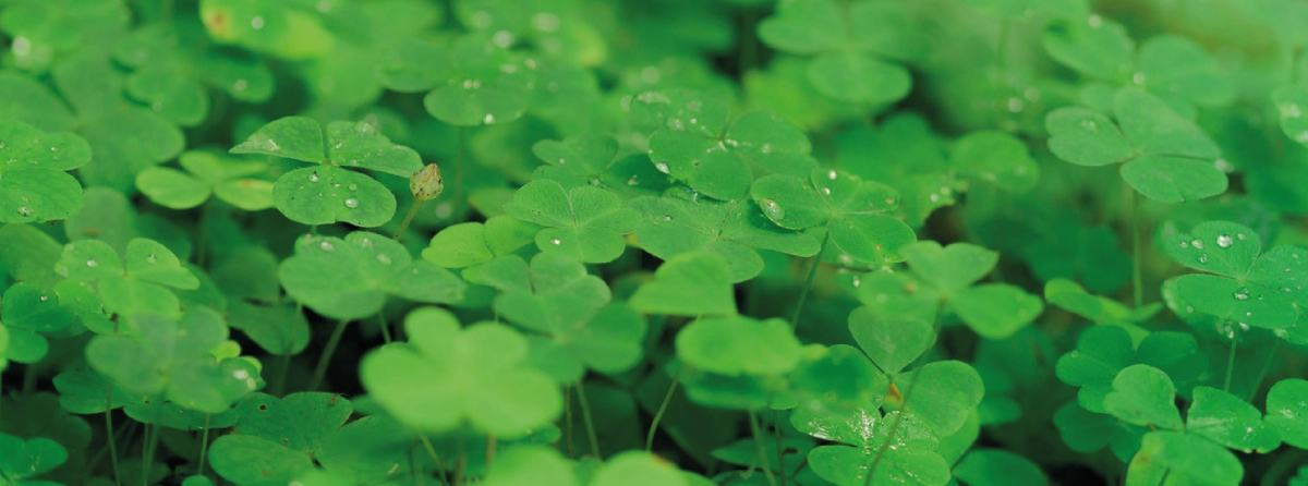 St. Patrick's Day: Taboo and I spy ...